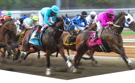 Your Horse Racing Glossary